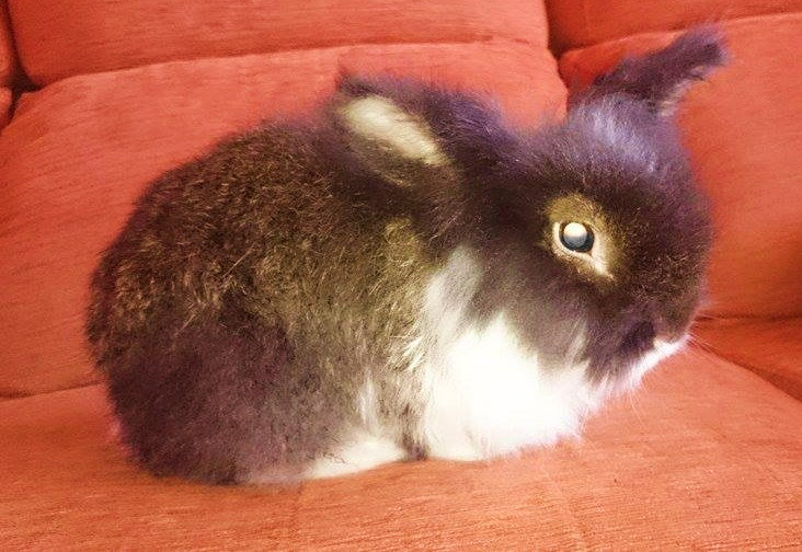 El conejo Sheldon en su nueva casita