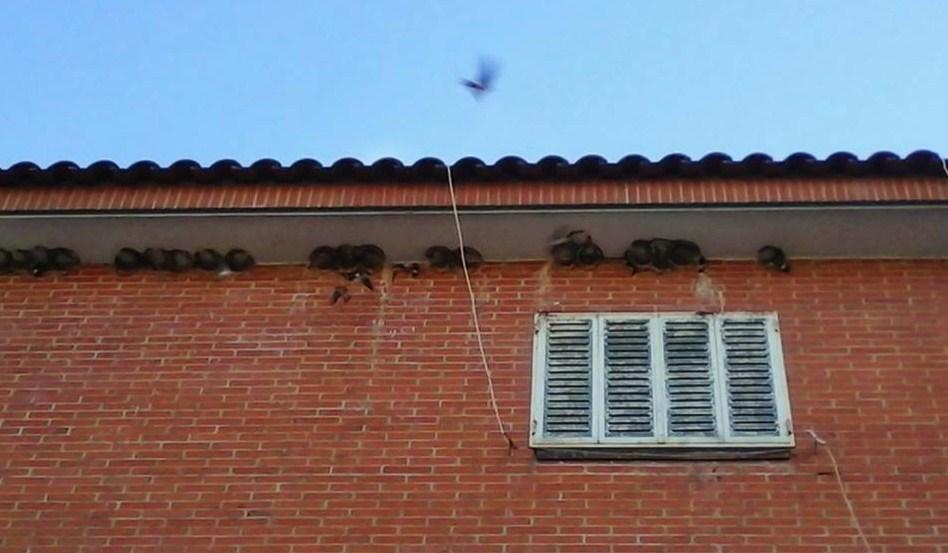 Foto de donde estaban los nidos de las golondrinas