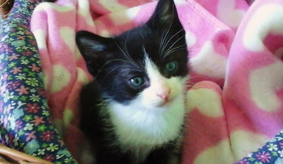 El pequeño gatito PETETE