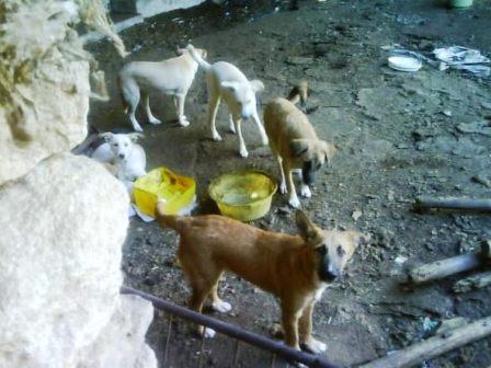 PERROS ABANDONADOS A SU SUERTE EN UNA CASA DE LA FREGENEDA