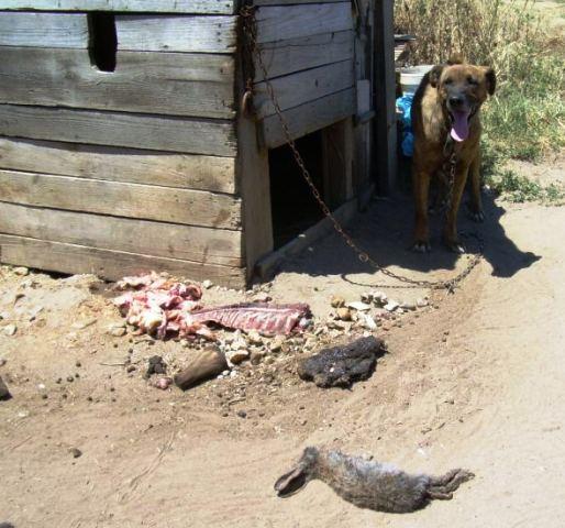 ANIMALES MALTRATADOS EN EL PUENTE DE LA UNIVERSIDAD