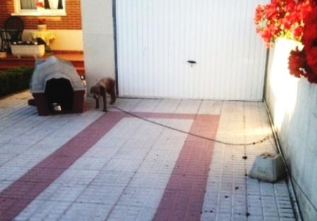 TUSCA, LA PERRITA QUE HA VIVIDO 15 AÑOS ATADA PARA QUE NO PISARA EL JARDÍN